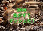 【2019】新年、明けてました!今年も宜しくお願いいたします!